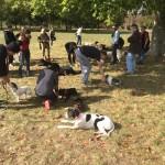Quels atouts pour nos cours d'éducation canine ? Découvrez nos séances de dressage de chien près du 16 è arrondissement de Paris ?