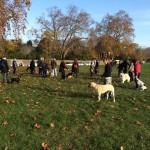 Découvrez les solution d'un comportementaliste pour chien dans le 20 e arrondissement de Paris
