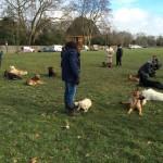 Problème de comportement avec votre chien ? Contactez un comportementaliste canin près du 12 ème arrondissement de Paris