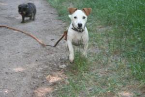 sortie canine dans le Parc de Vincennes