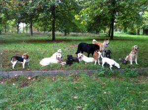 promenade dans le Bois de Vincennes