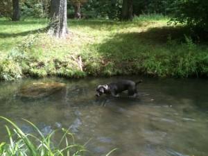 baignade canine au Parc de Vincennes