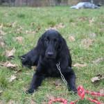 Education canine au bois de Vincennes