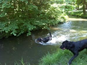 ortie canine dans le Bois de Vincennes