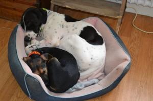 pension canine près de St Maur des Fossés