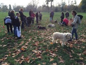éducation canine près de Fontenay sous Bois