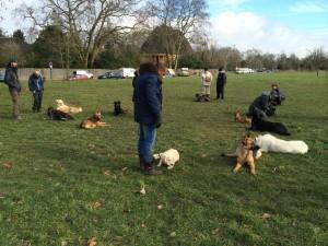 séance d'éducation canine près du Perreux sur Marne